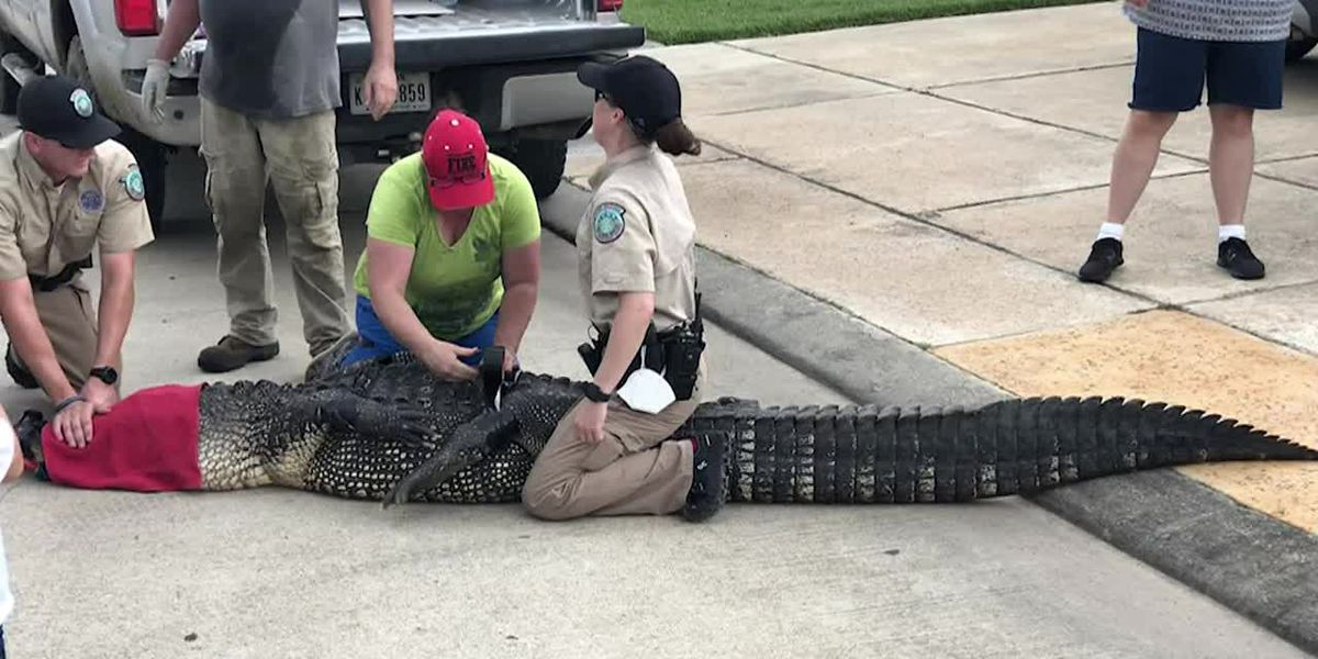 Texas dad saves kids from 12-foot alligator