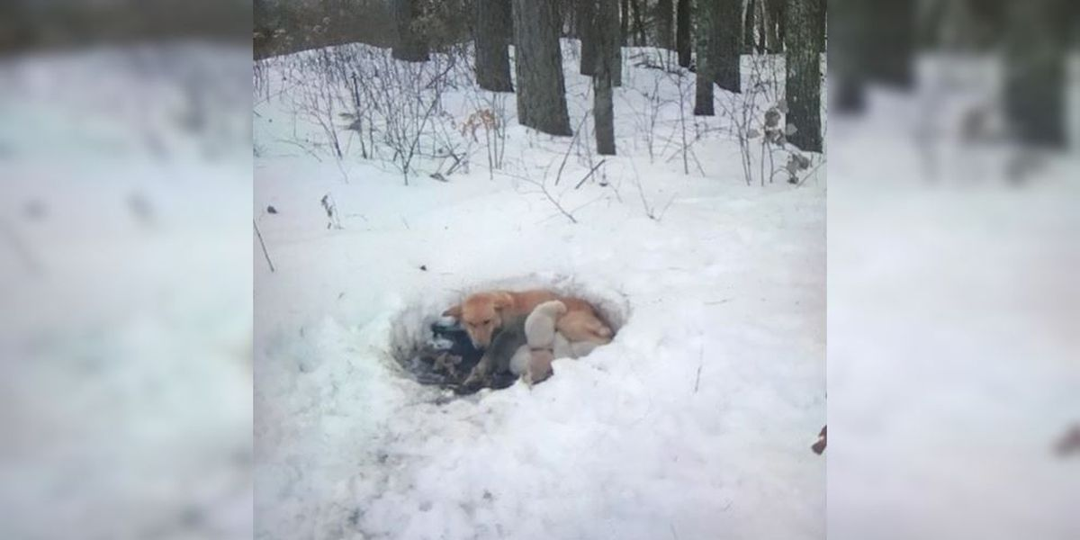 Family rescues mama dog and pups from Minnesota snowdrift