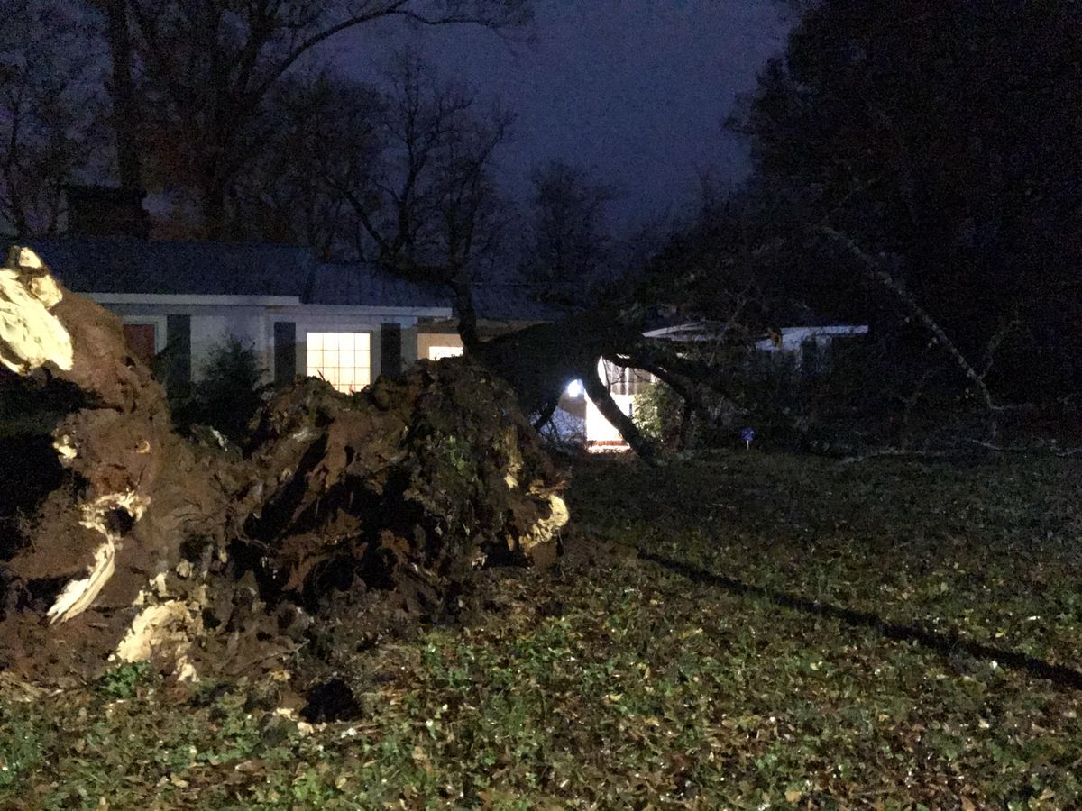 Trees reported down across B'ham and surrounding counties