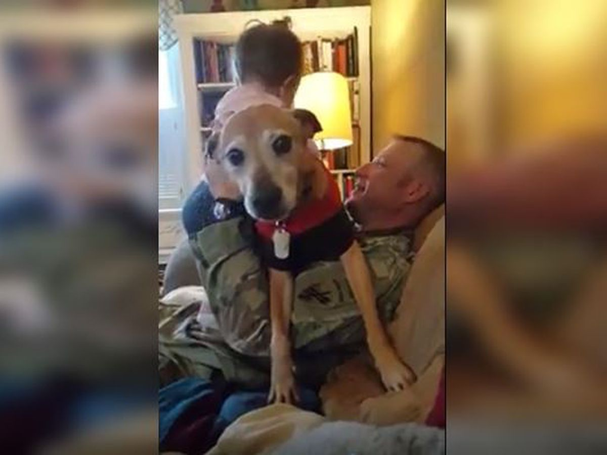 WATCH: Dog tries to hog all the attention meant for her human sister