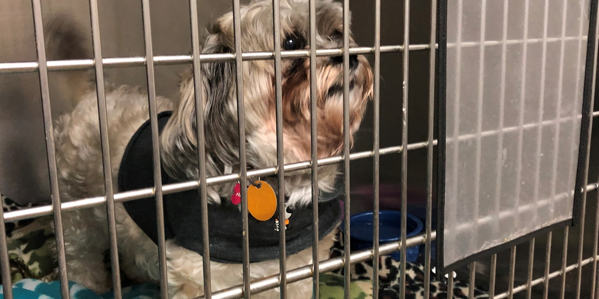 Birmingham organization helps pets and their veteran owners on World Spay Day