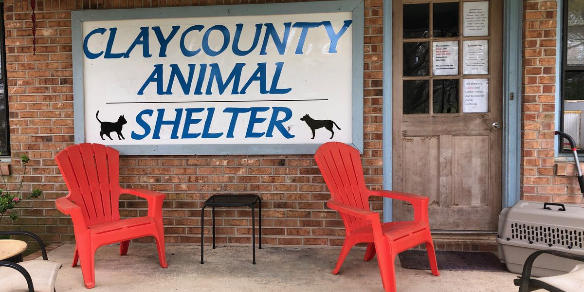 Parvo outbreak temporarily closes Clay County Animal Shelter
