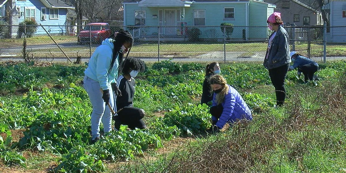 MLK Day is a 'day on' at the Bush Hills Community Garden and Urban Farm