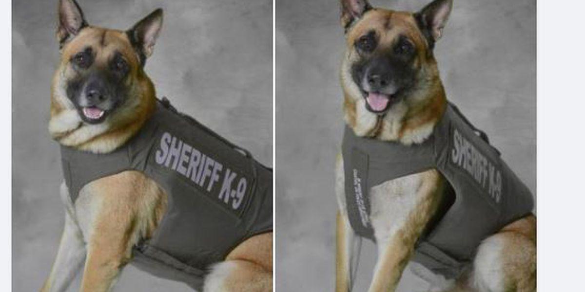Blount County Sheriff's K9 Zeus gets body armor donation