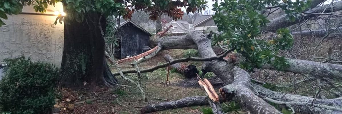 VIDEO reveals overnight storm damage in Leeds & Irondale