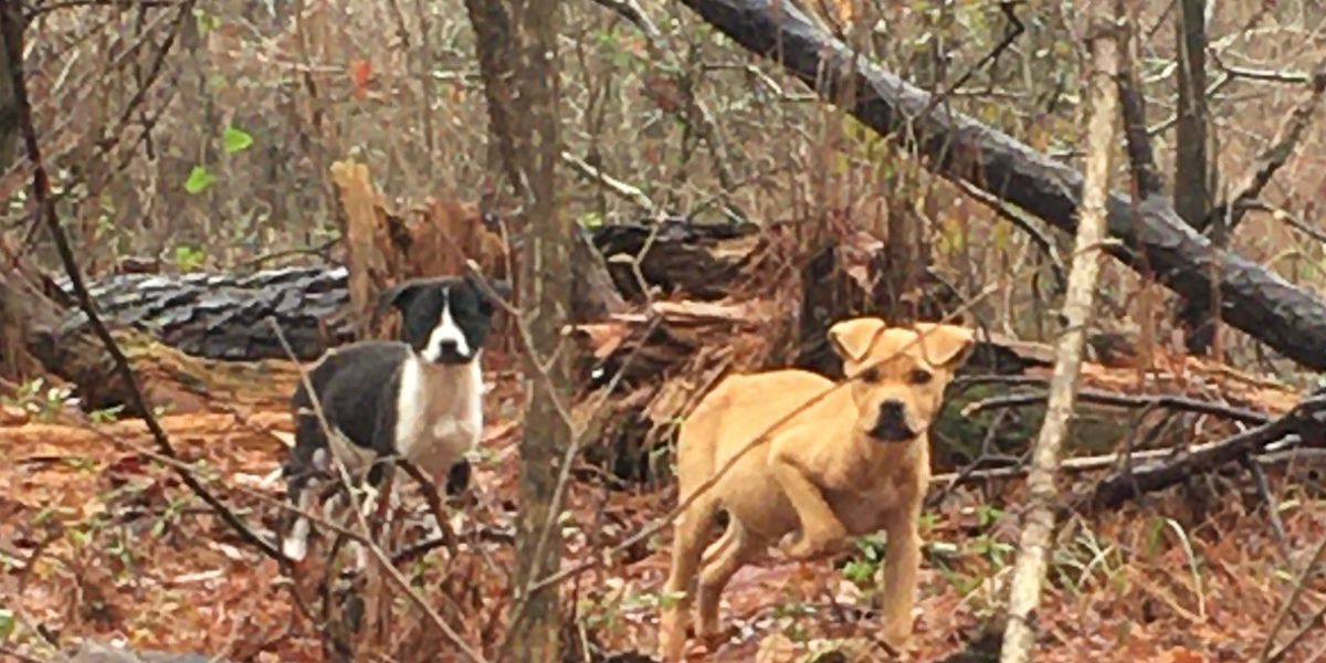 Puppies continuously abandoned along rural Montgomery road