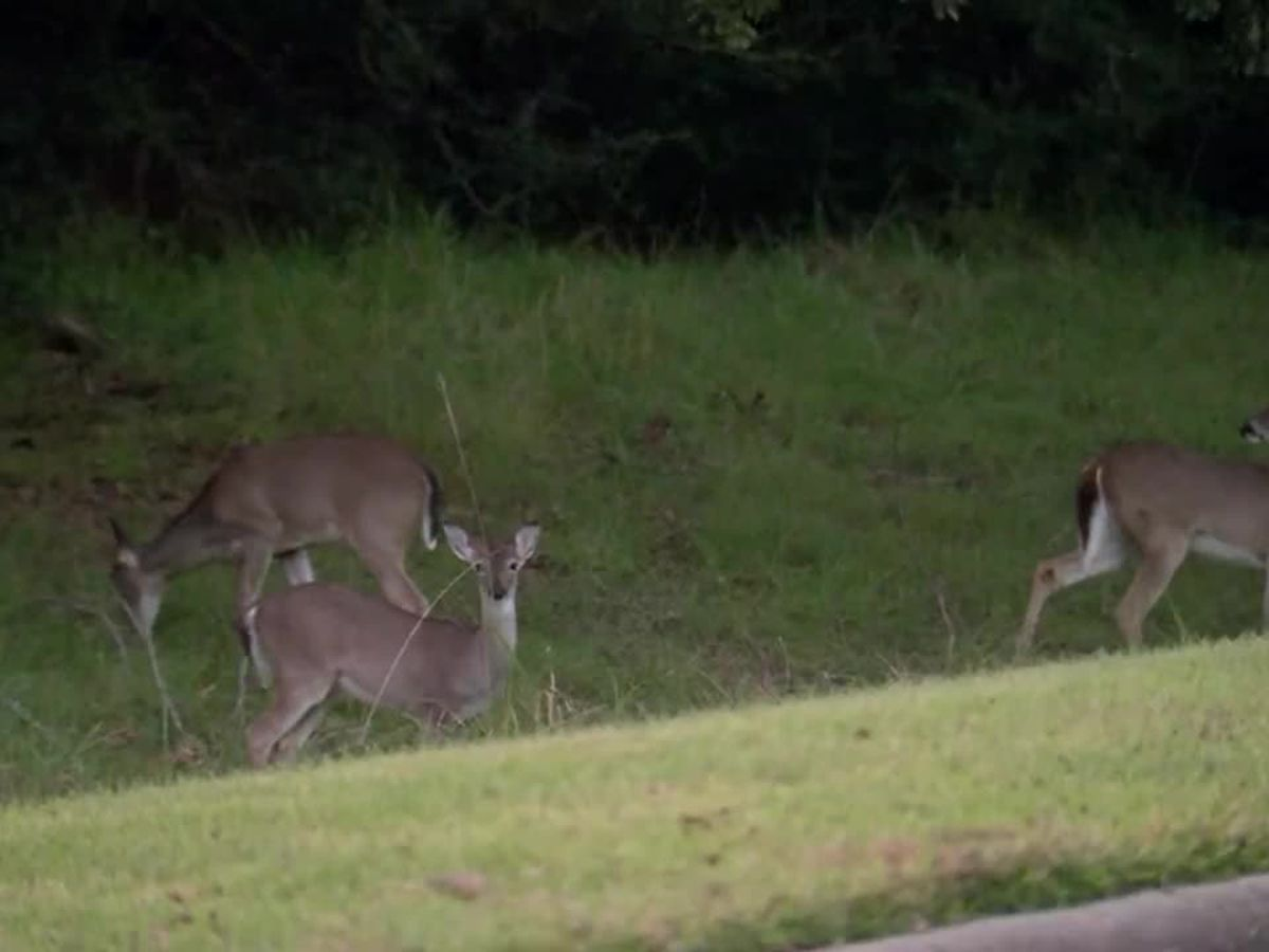 Registration opens for deer hunting program at Oak Mountain State Park