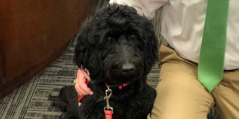 Cullman Co. courthouse receives service dog to help children while testifying