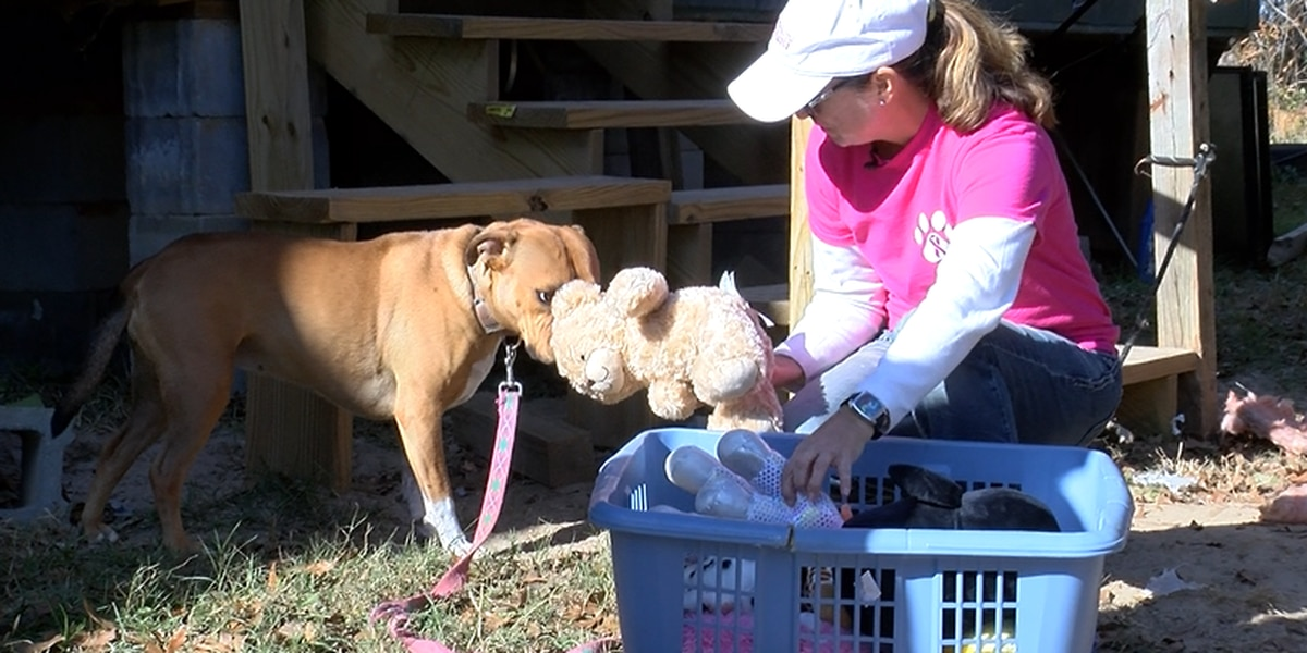 Woman volunteers time and money to provide better living conditions for neighborhood pets