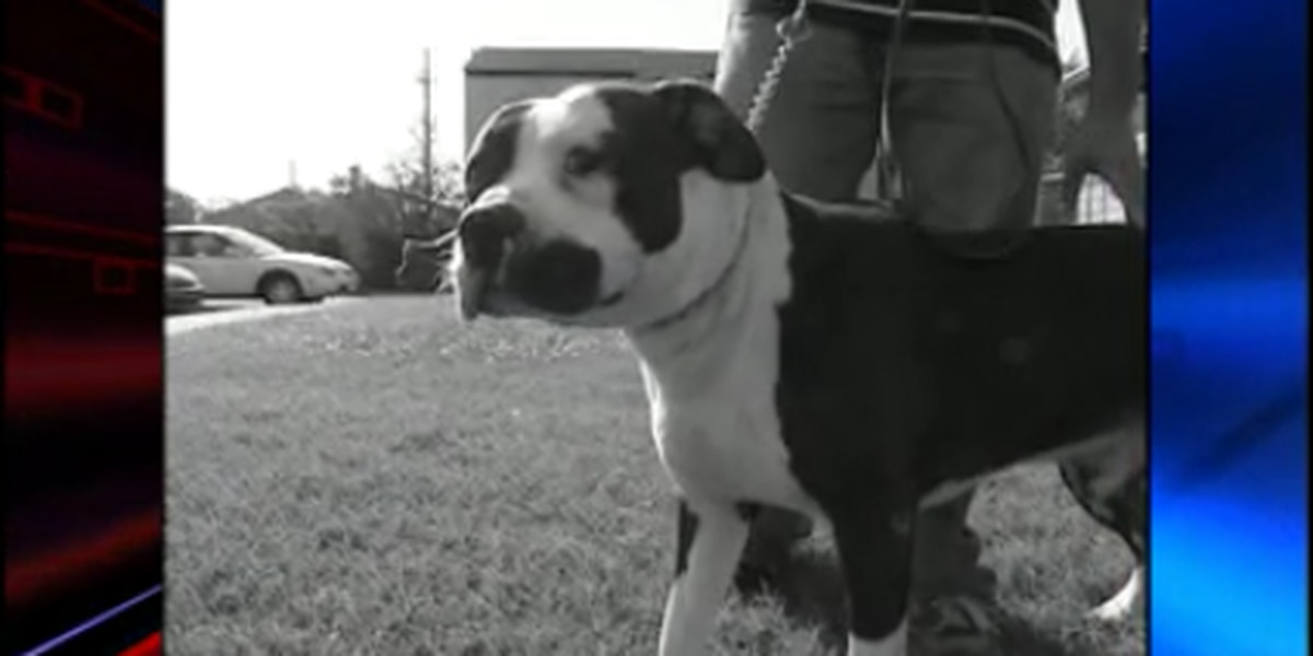 Gardendale lifts ban on pit bulls