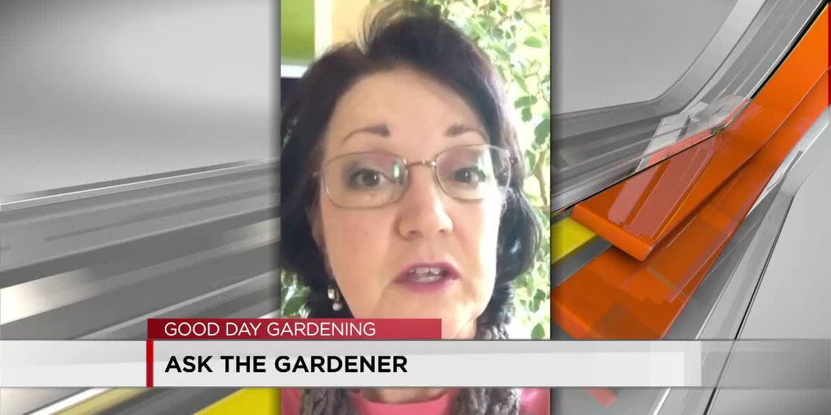 The Gardener answers your questions