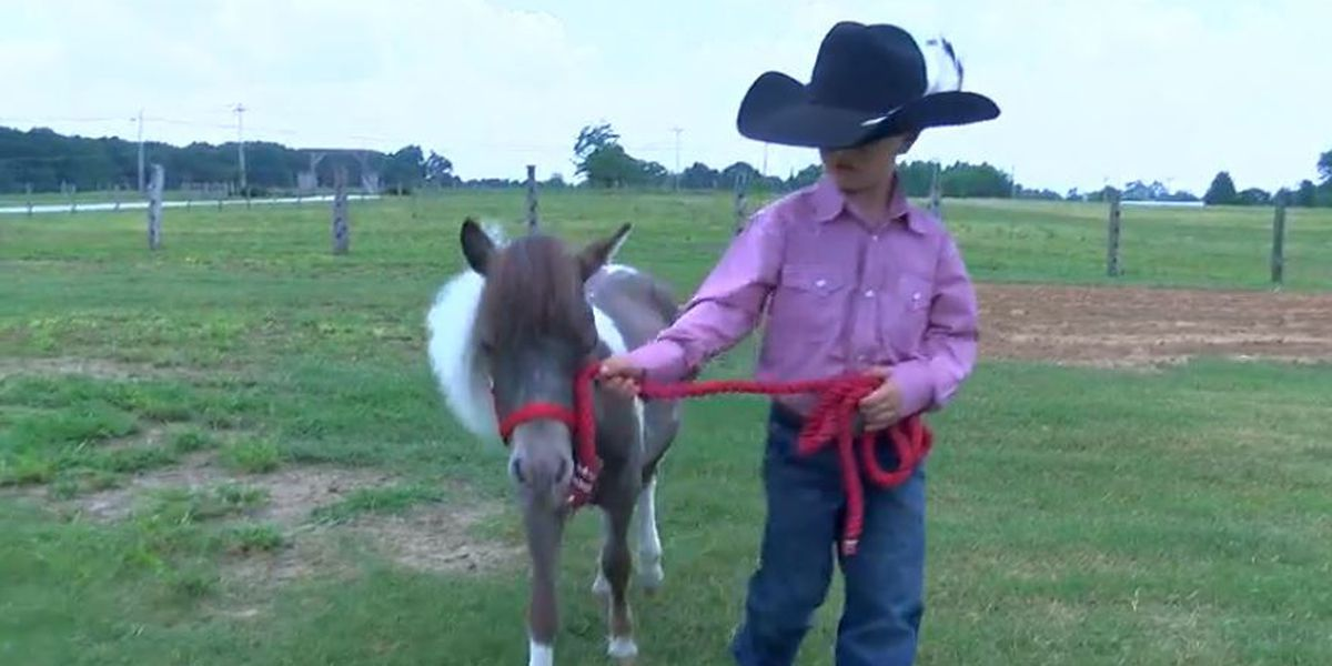 A boy and his pony, the making of a viral video in Alabama
