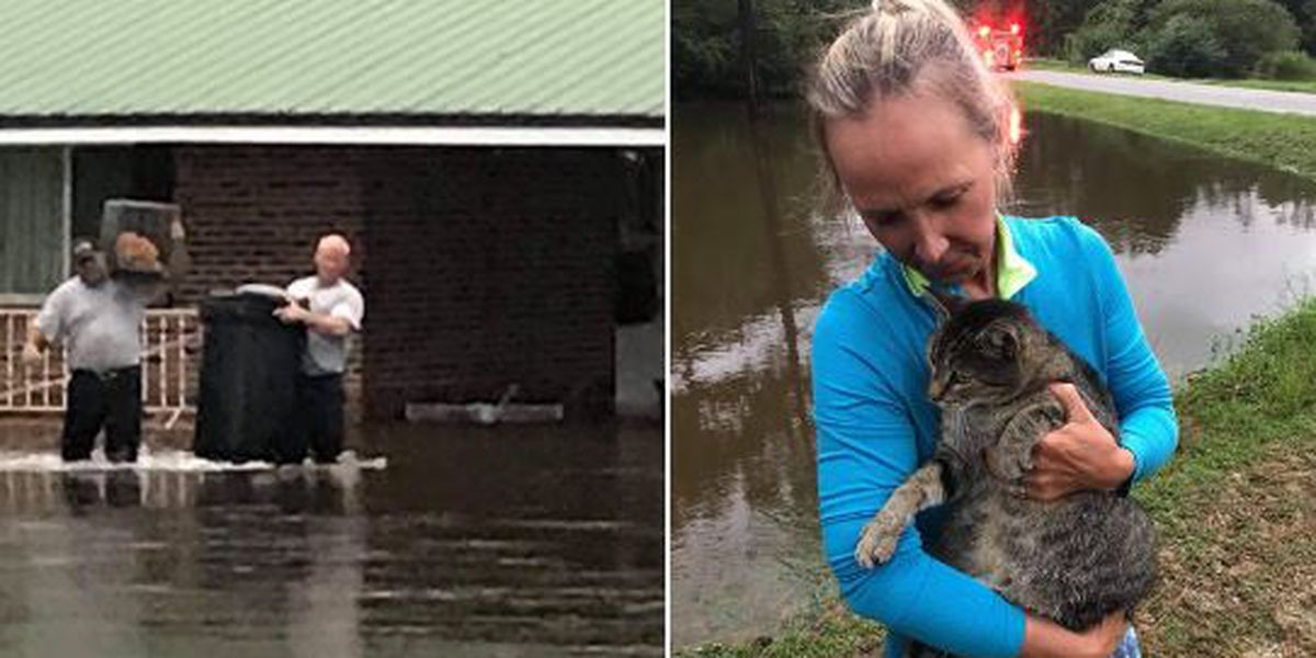 Florida fire rescue team helps woman save 8 pets from flooded home