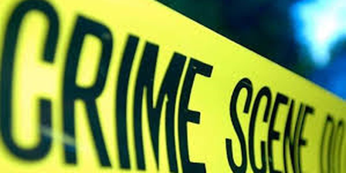 Police investigating body found in woods near Dogtown