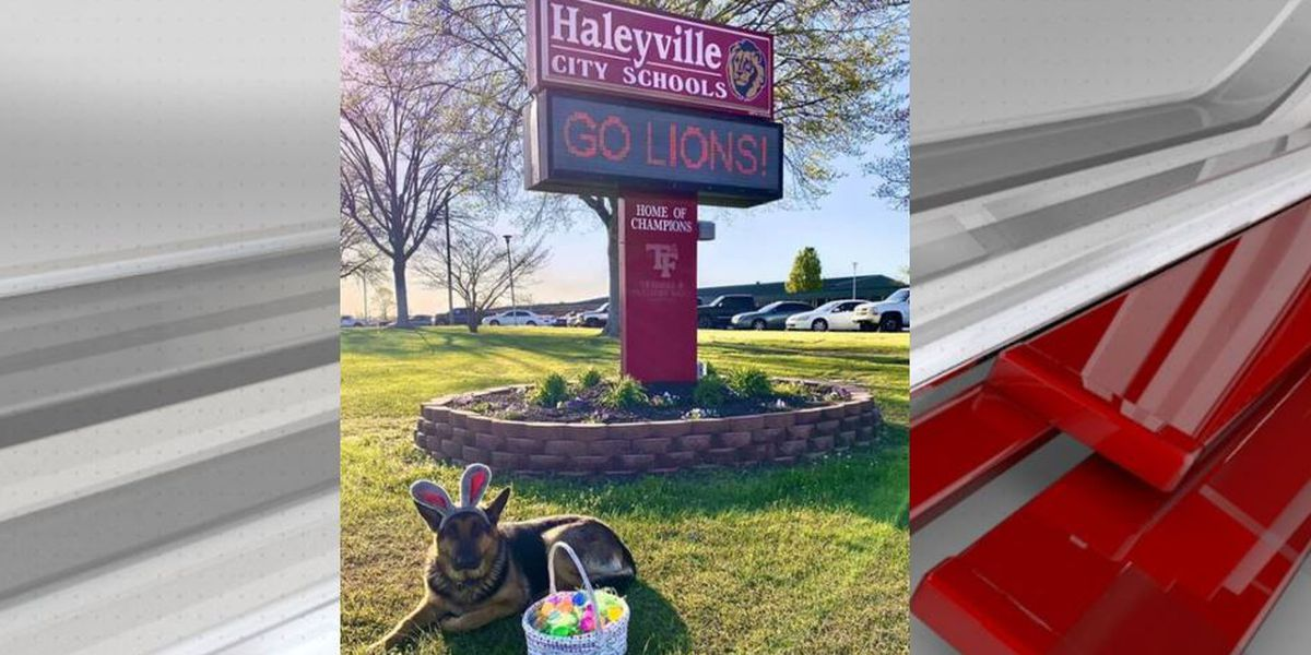 CUTE! Haleyville City Schools wishes students a Happy Easter