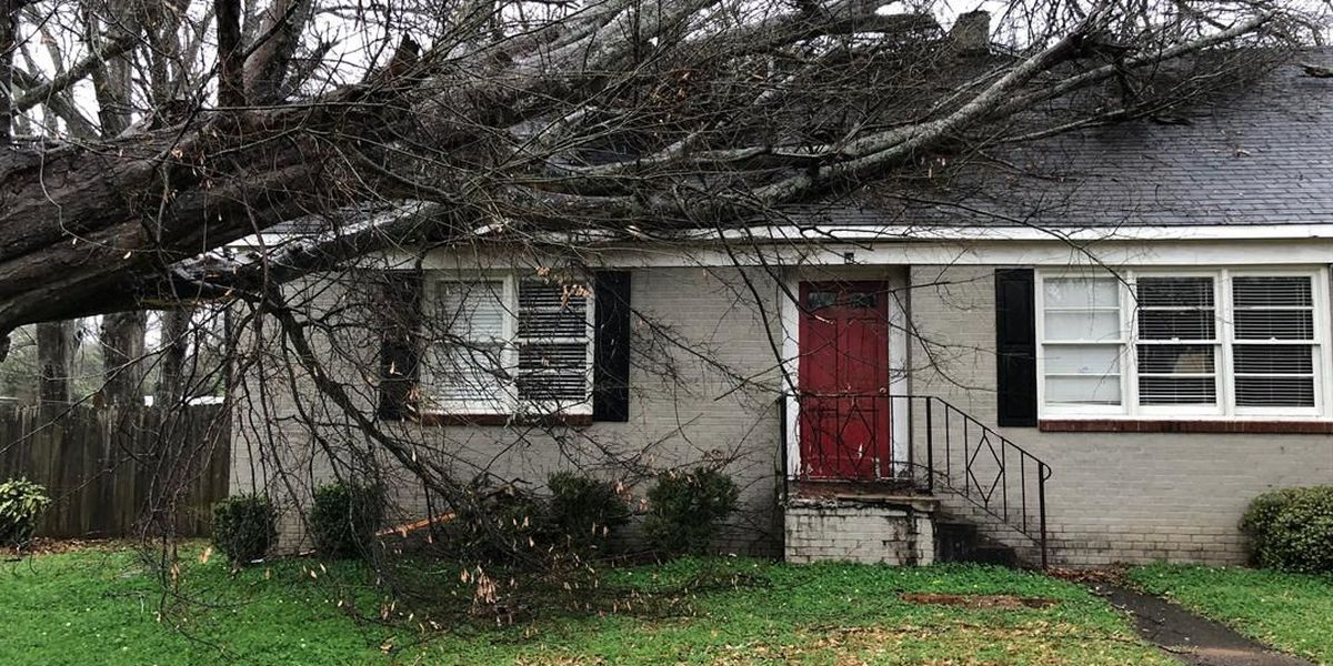 Strong winds topple trees, power lines in Central and East AL