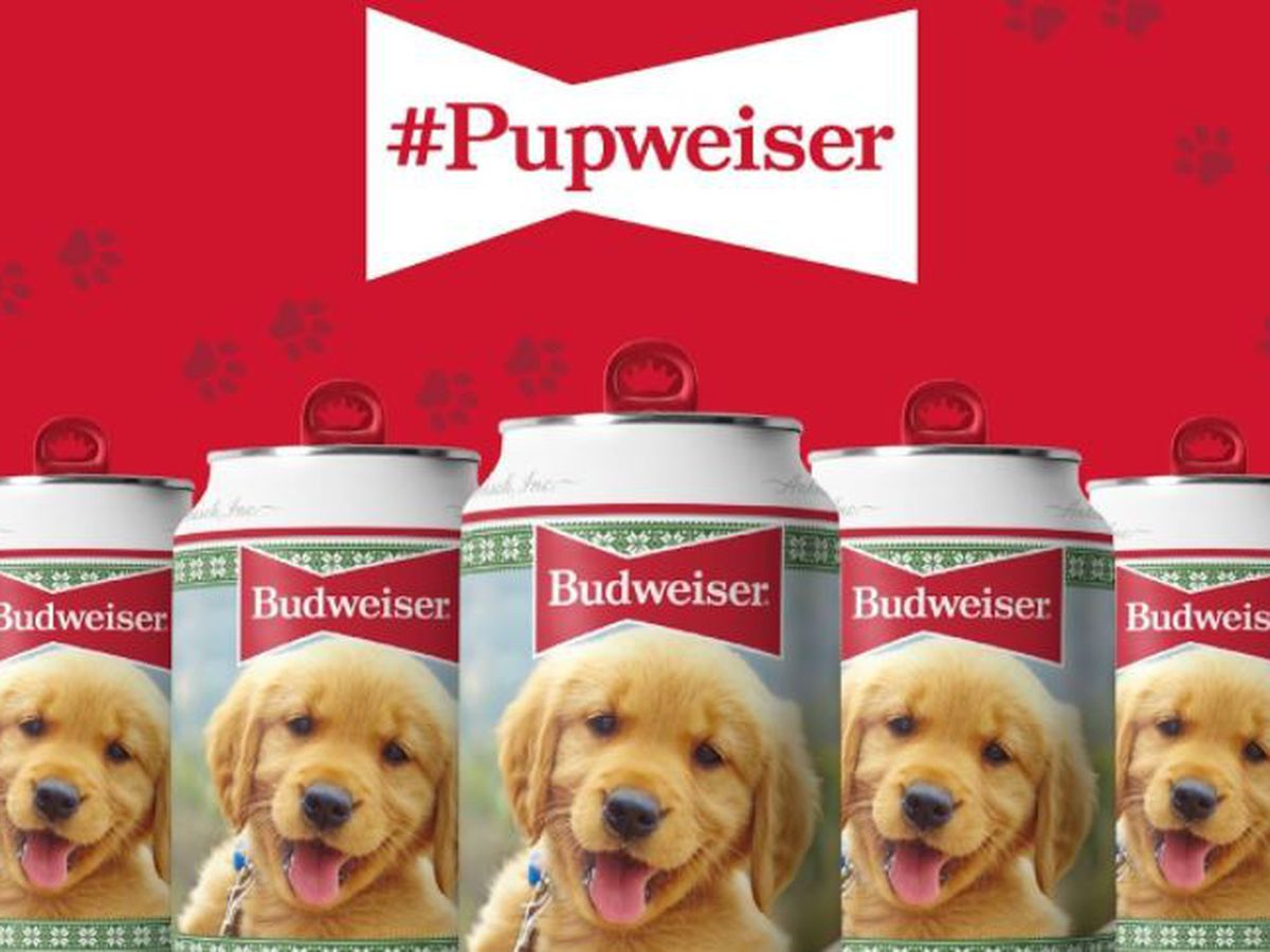 Your pup could be the new Budweiser star
