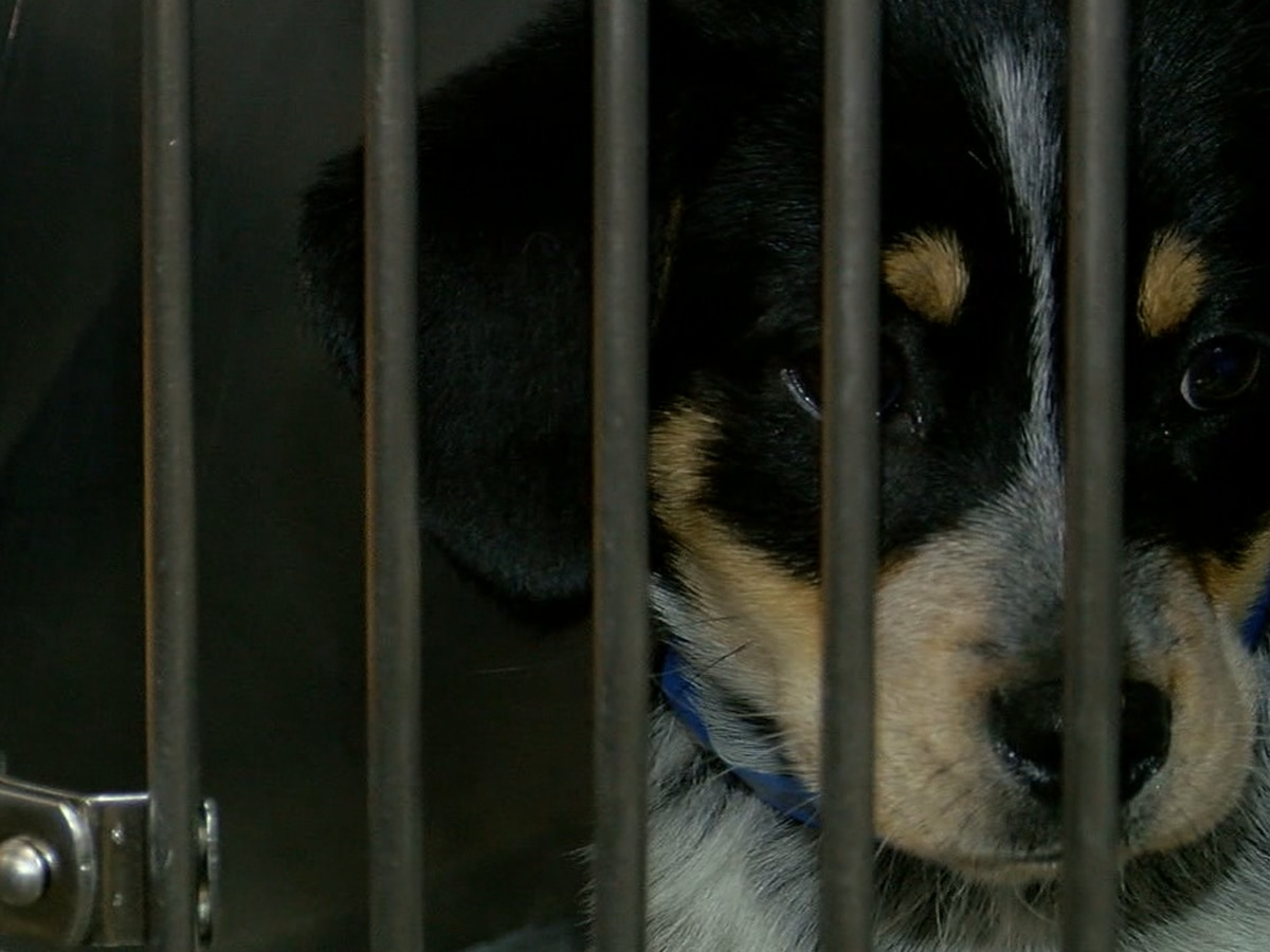 Shelby County Humane Society offering free spay and neuter