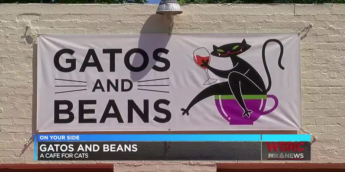 Gatos and Beans: A cafe for cats