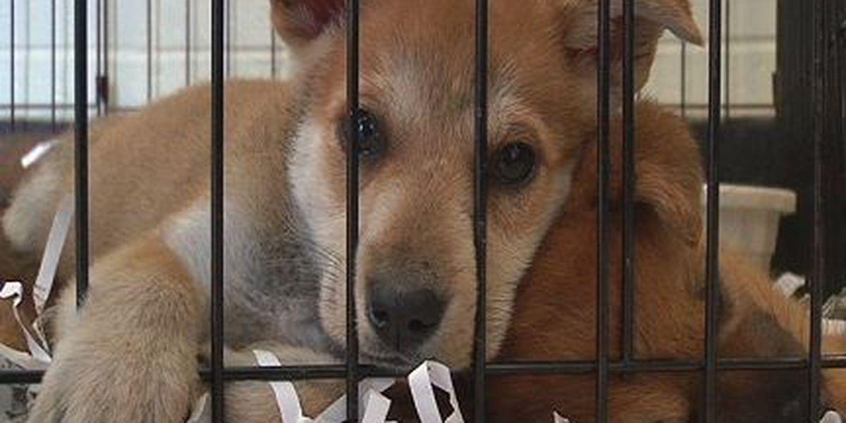 Dog food needed after Prattville-Autauga shelter burglary
