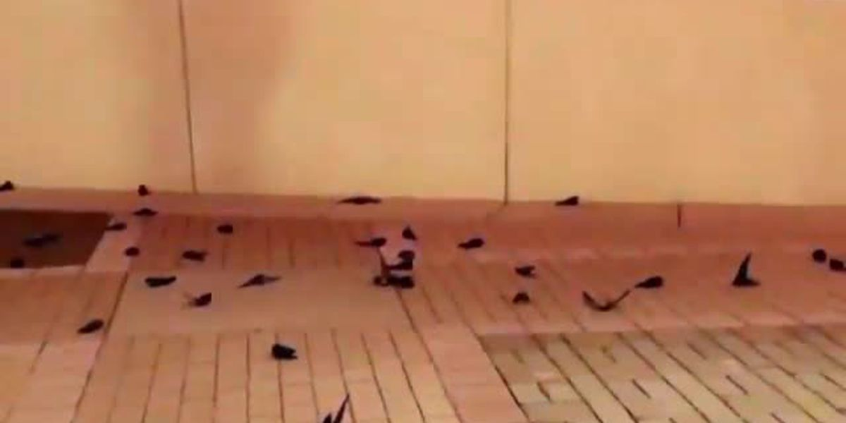 Hundreds of birds crash into NASCAR Hall of Fame building