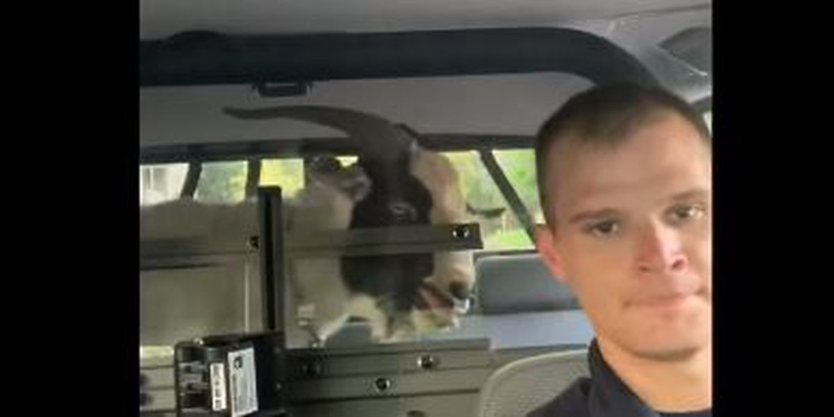 REMIX: Video of Irondale police officer singing with goat goes viral