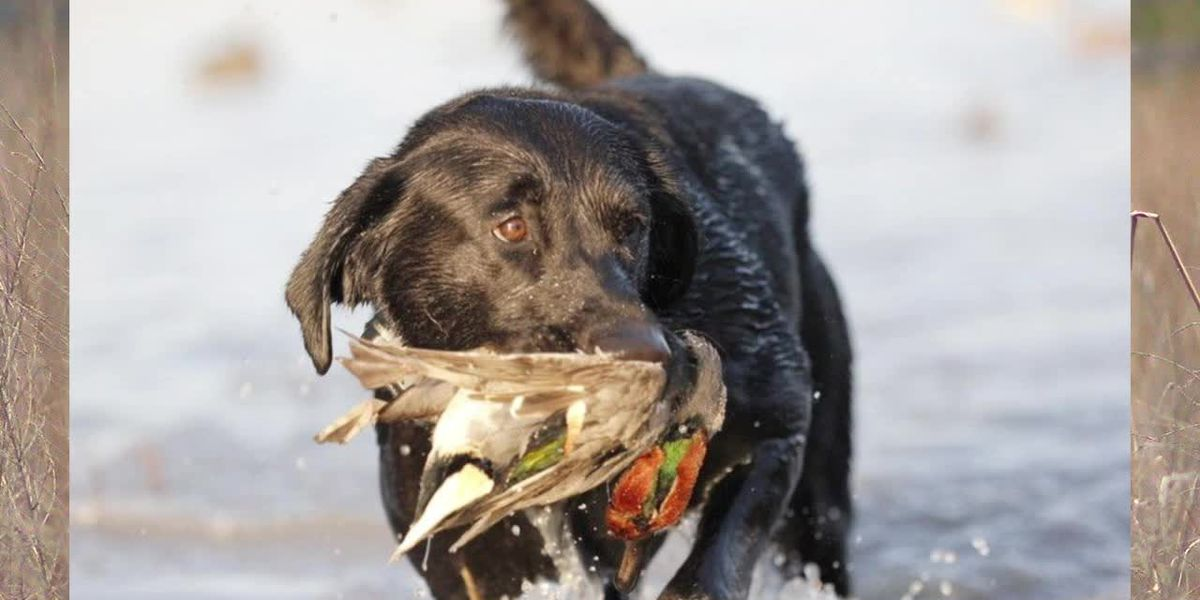 Absolutely Alabama: Black Belt Bird Dogs