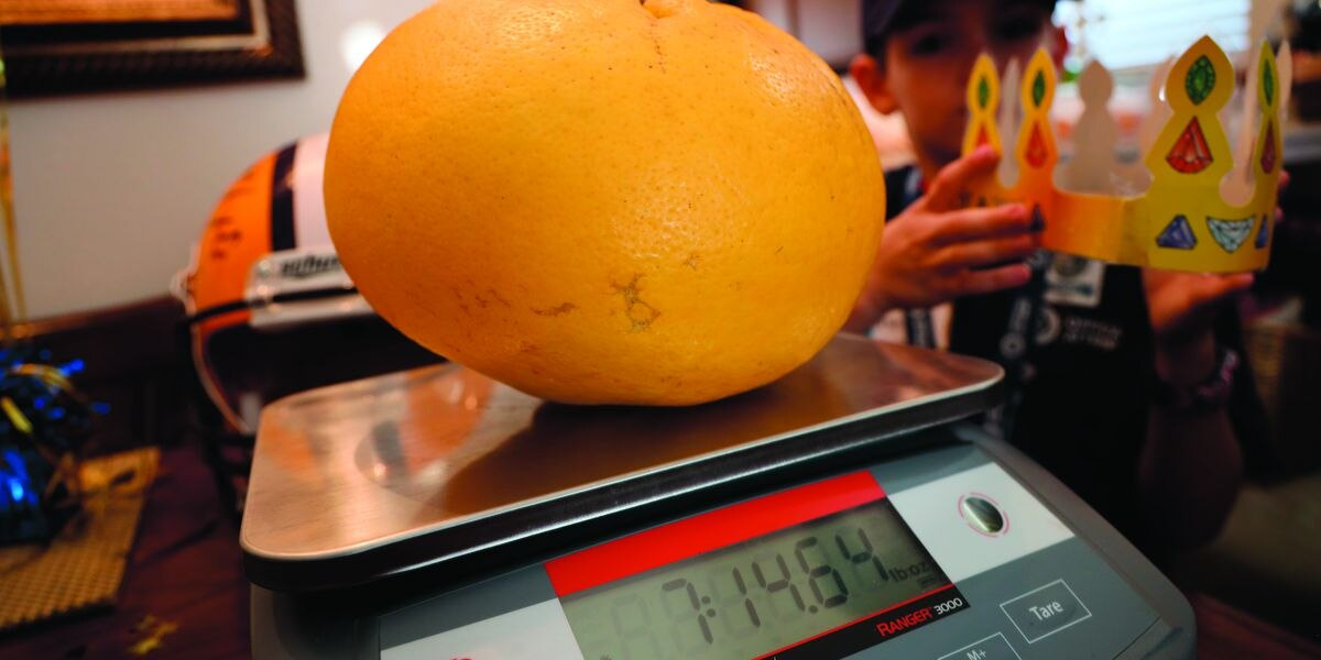 World's heaviest grapefruit is in Louisiana; Guinness World Record awarded